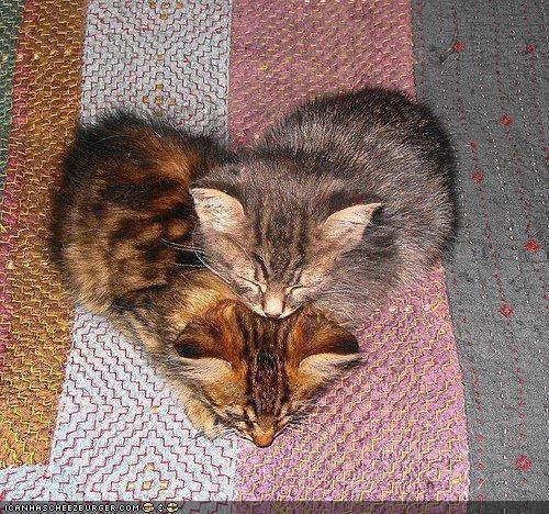Cat heart